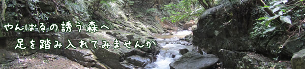 river trekking in okinawa japan