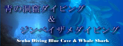 Blue Cave Diving & Whale Shark Diving in OKINAWA